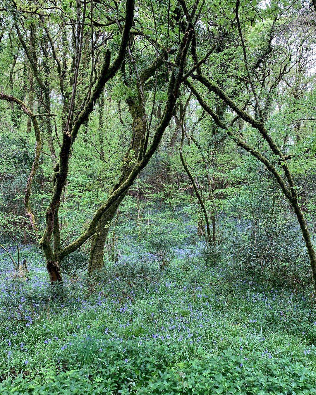 Warson Woodland