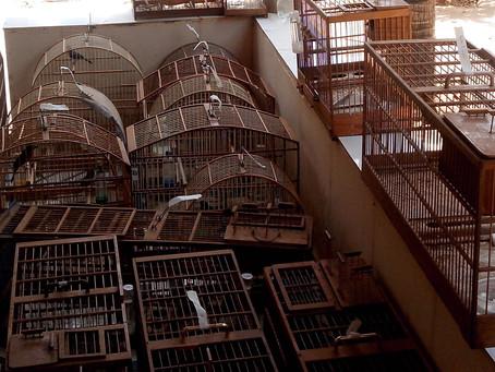 Ações contra o tráfico de animais são realizadas em MG