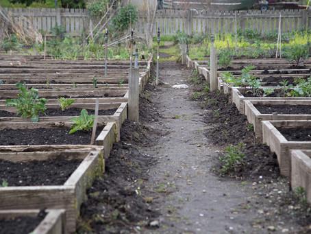 Programa desenvolve hortas em terrenos abandonados