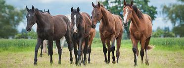 Brazzen Horses.jpg