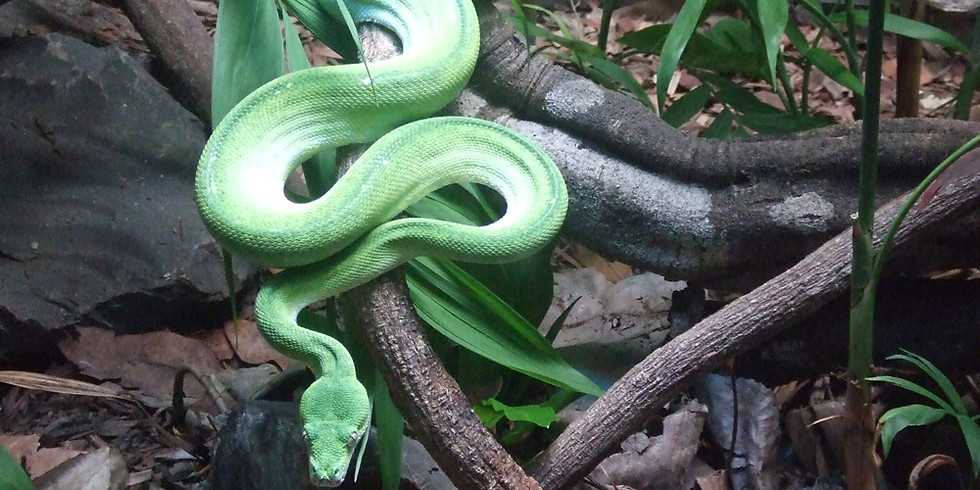Snake Farm and Animal Zoo