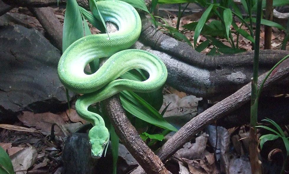 Diplom Reptilien Tierheilpraktiker