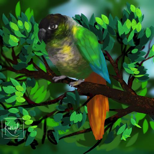 'Parakeet' Commission