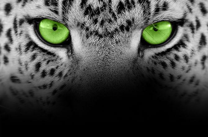 background_image_black.jpg