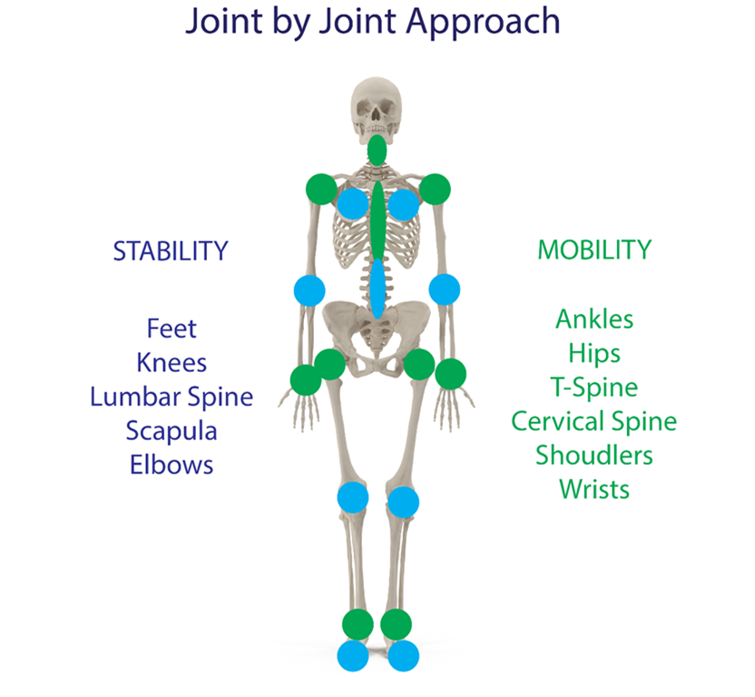 joint by joint, mobility, skeletal mobility, stability, musculature,