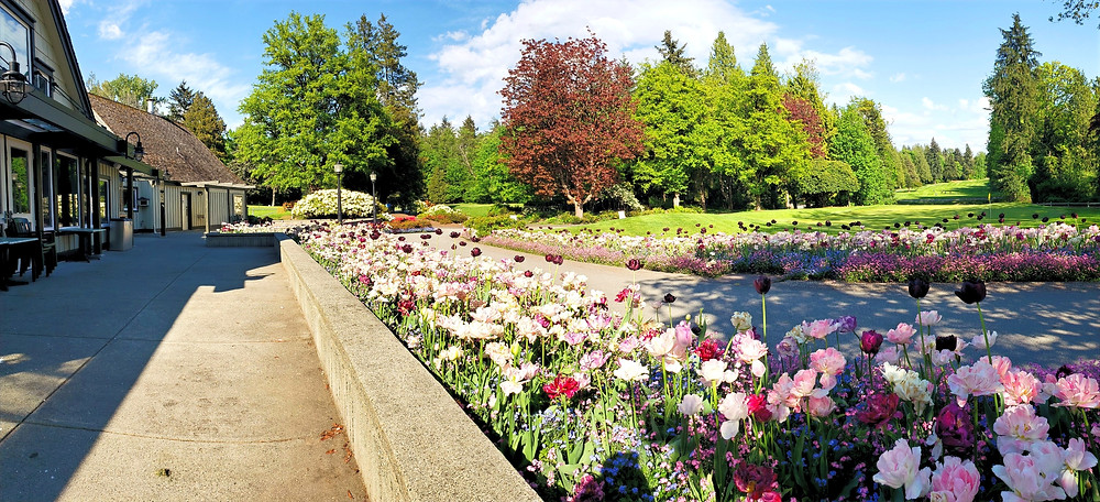 Fraserview Golf Course in Vancouver, Canada.  Beautiful flower gardens overlooking the 18th green at the golf course.