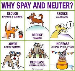 spay neuter poster.jpg