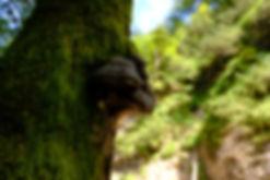 Baum mit Pilzbefall