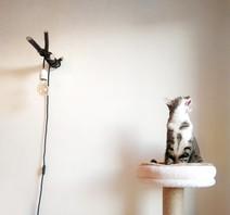 Ach ne, die Katze behalte ich doch...