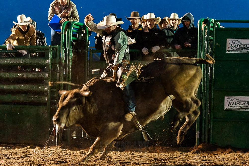Josh Birks' Short Round ride on Skori Bucking Bulls' Jawbreaker