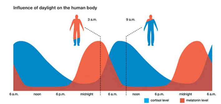 cortisol-melatonin-and-sleep.png