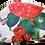Thumbnail: Roses to Go
