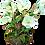 "Thumbnail: Silk Hellebore Drop-In - 12.5"""