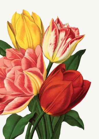 Gift Insert Card - Tulips