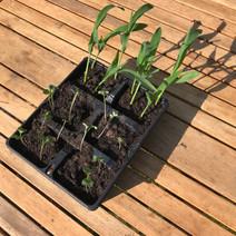 Watching plants grow