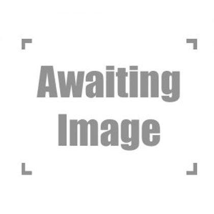 Archispirotreptus gigas (African Train Millipede) Large