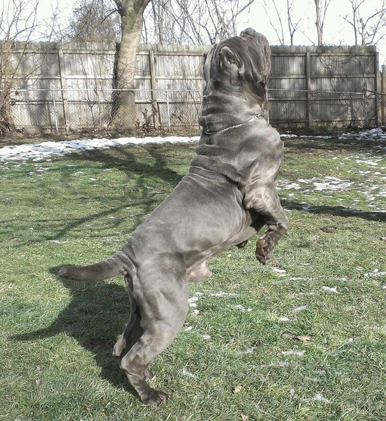Severino jumping