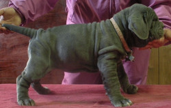 Othella at 7 weeks old