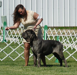 Alrigo at Terre Haute 2014