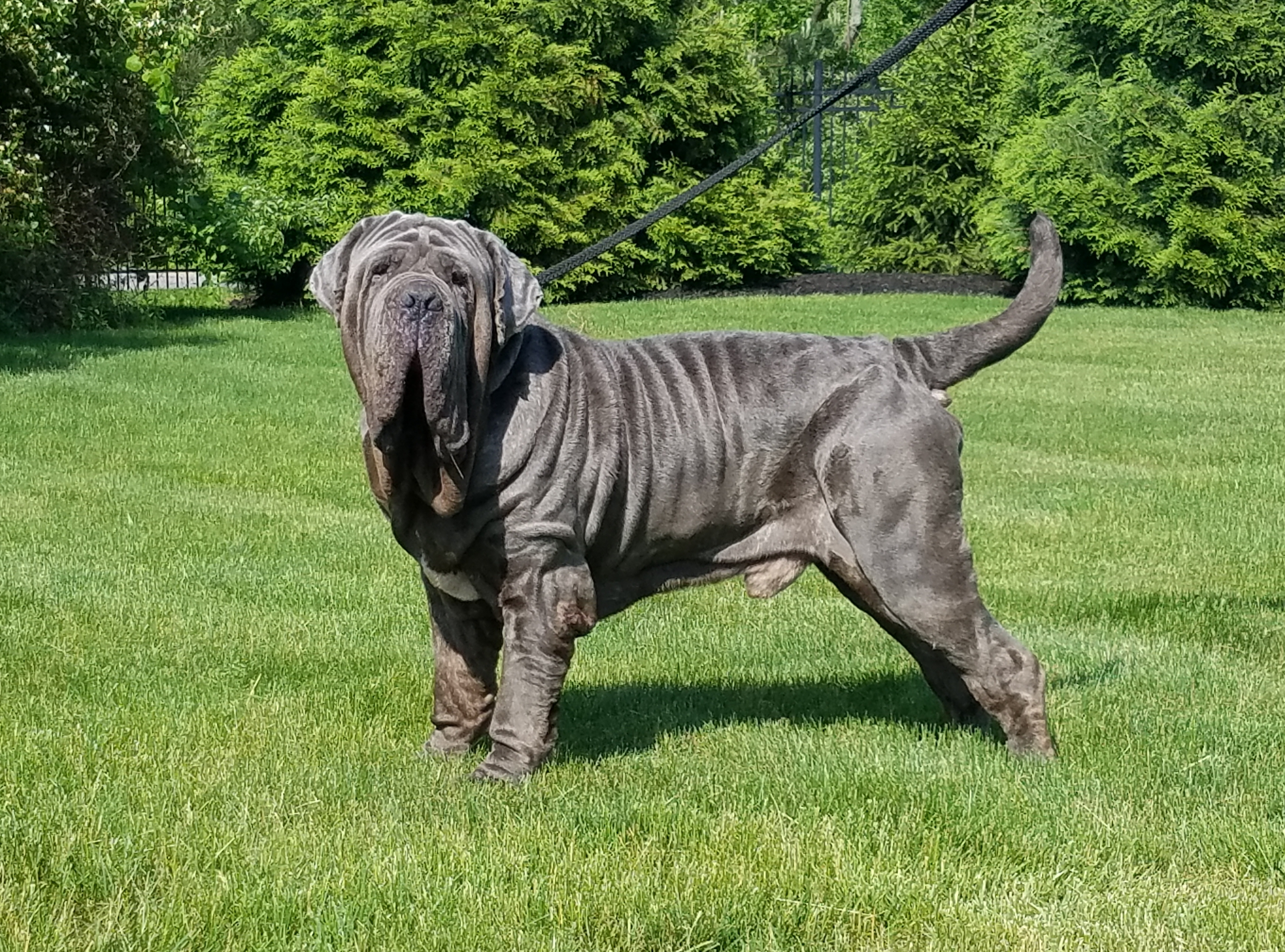 il Drago Gryphon 5 years old