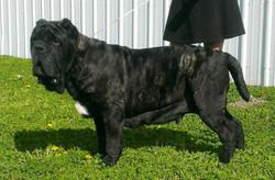 Xsandra at 30 months