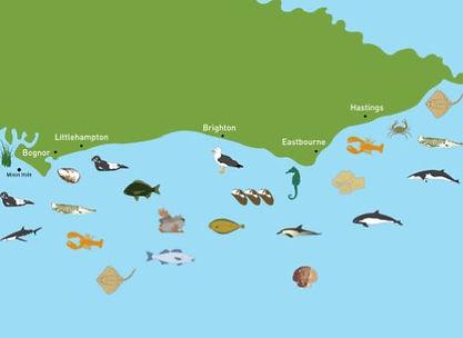 Sussex coatline marine life.JPG