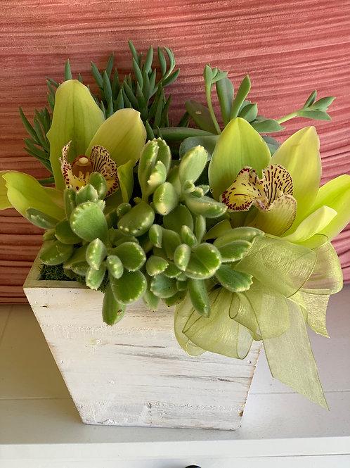 Succulent Planter Box