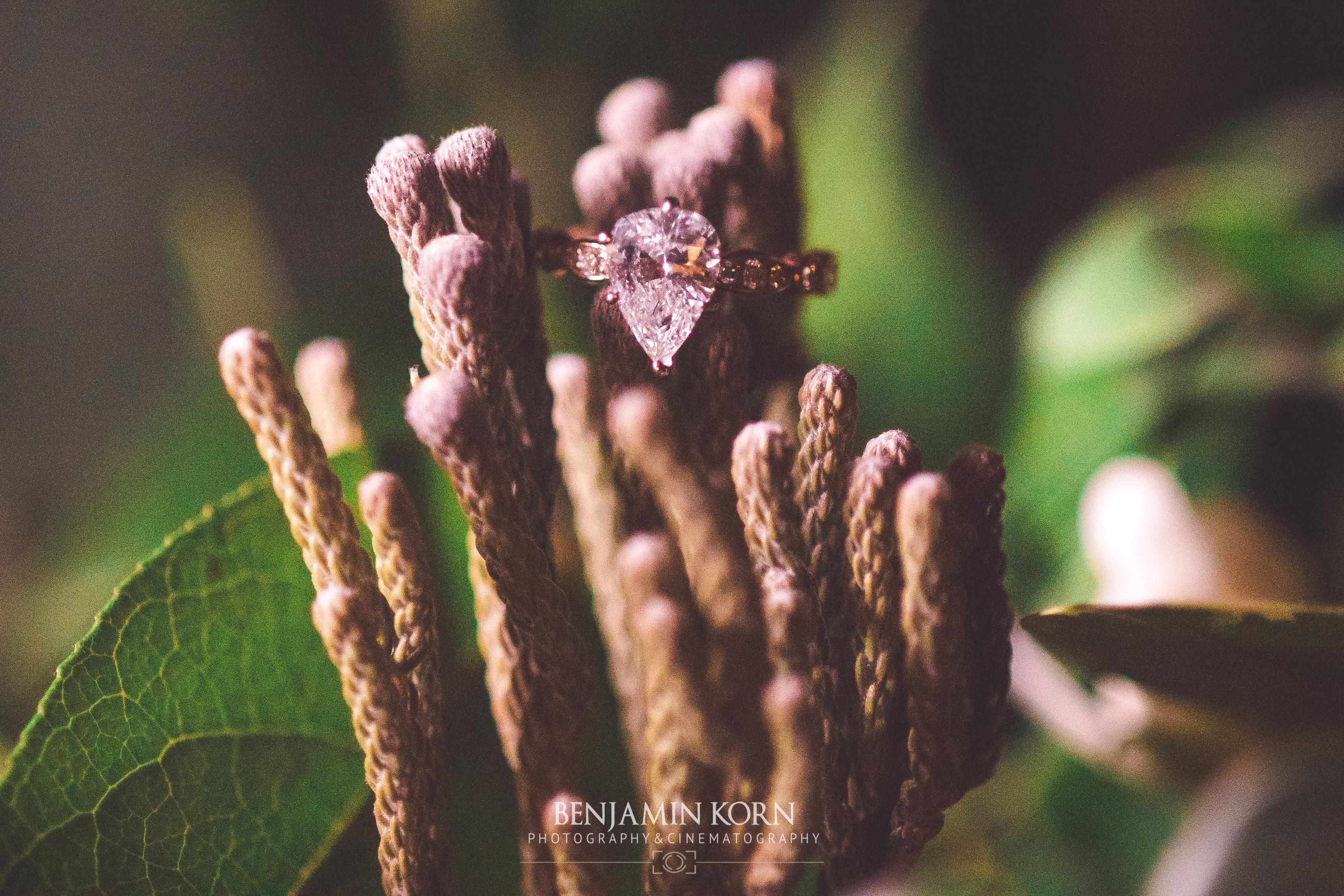 Wedding Photo-8249
