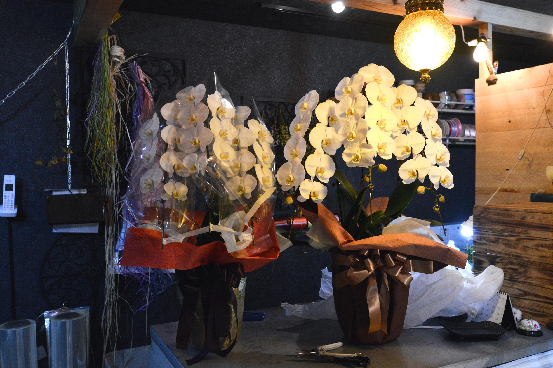 胡蝶蘭 祝花 御祝い