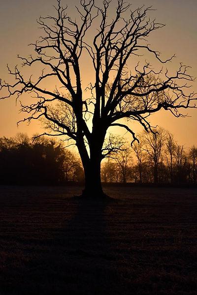 TMB Tree.jpg