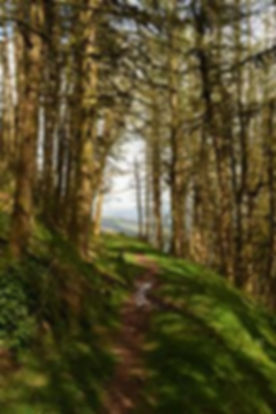 MB wooded path2.jpg