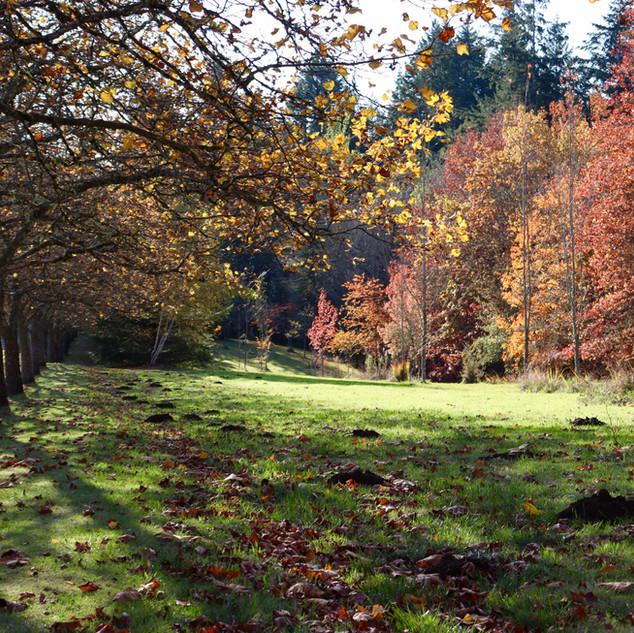 The Memorial Trail