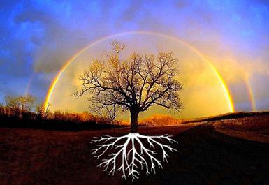 arbre-racines-ciel.jpg