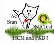 HCM PKD.png