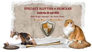 Willow participera à la Spéciale d'élevage Scottish ce 26 août en France
