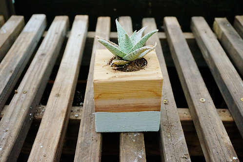 Painted 4x4x4 cedar block planter
