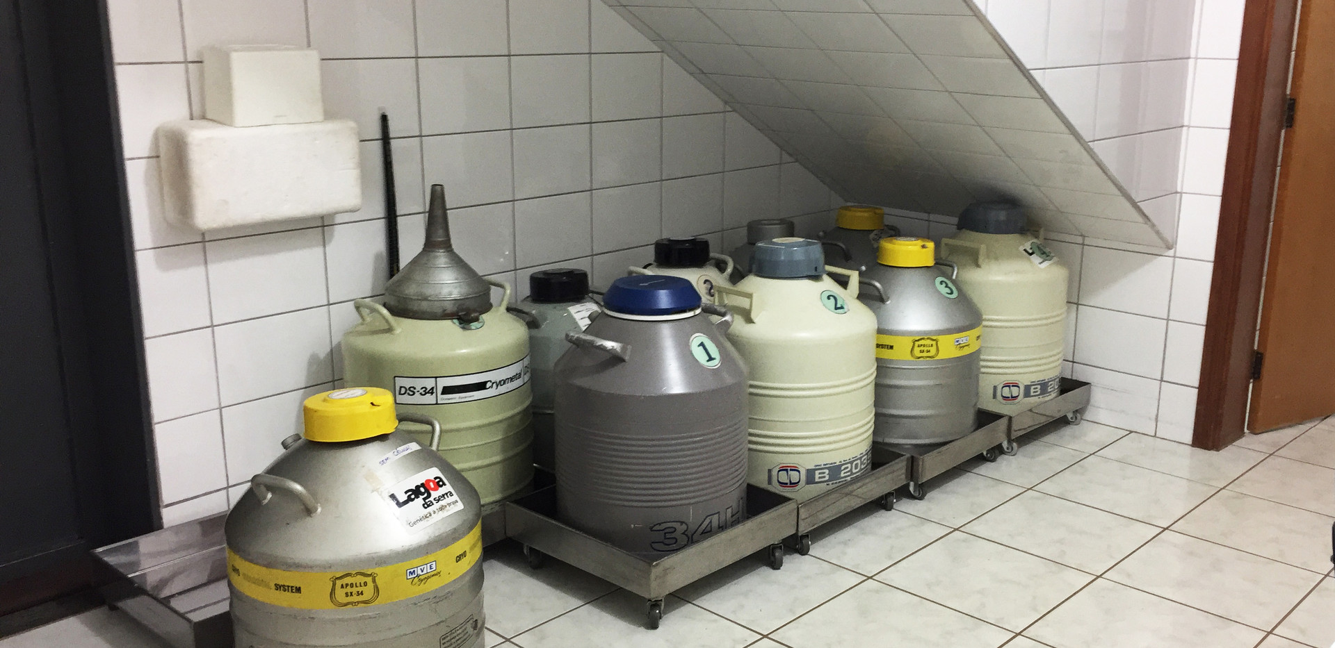 Room of cryopreserved