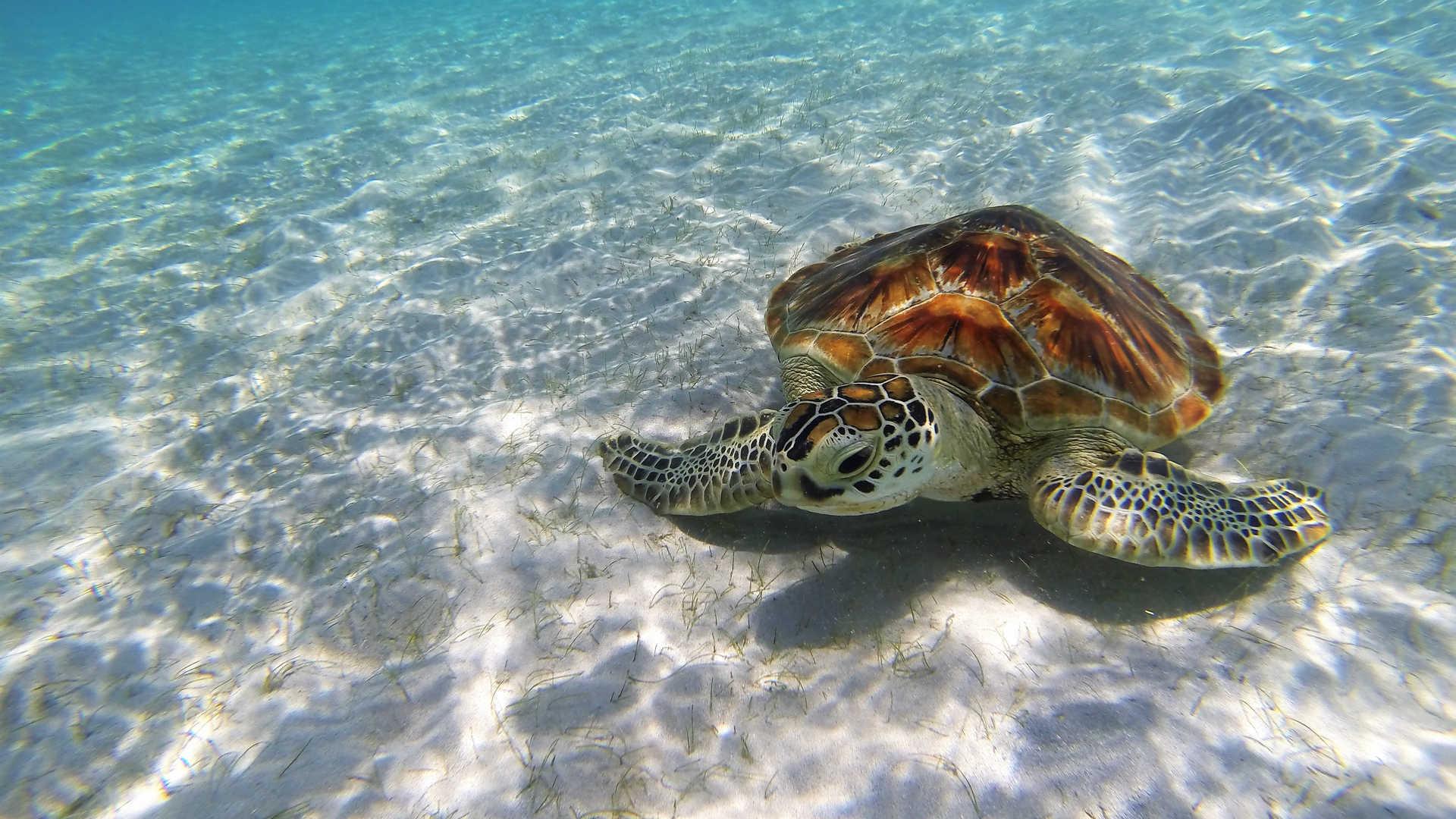turtle beach edit.jpg
