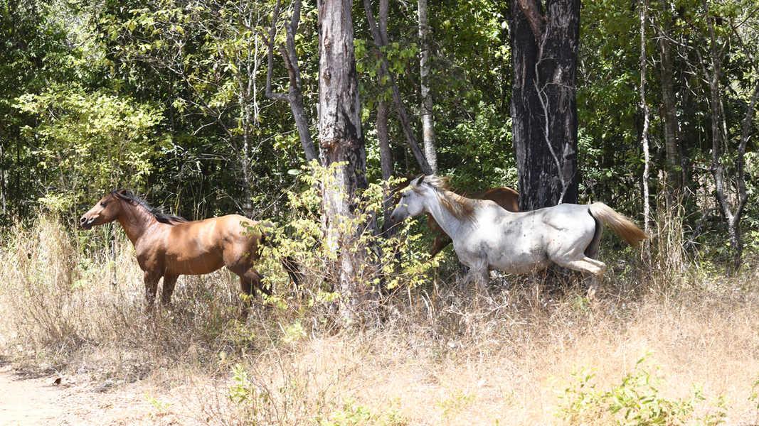 Horses running.jpg