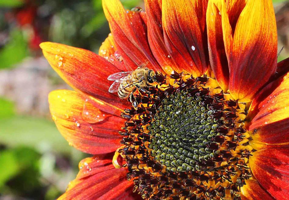 BeeSun2b.jpg