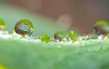 LeafDrop.jpg