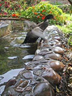 Ducks7.jpg