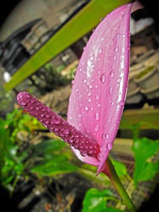 Fresh Rain 1