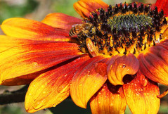 BeeSun3b.jpg