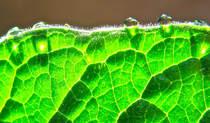 Droplets2.jpg