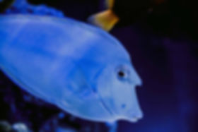 los angeles aquarium service, los angeles fish store, san fernando valley fish store, chatsworth fish store, fish tank service, aquarium service, aquarium design, aquariums service, aquarium maintenance, fish store, pet store,  coral store, aquarium store