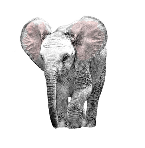 Artistic-Print-Elephant-Sketch-Watercolo