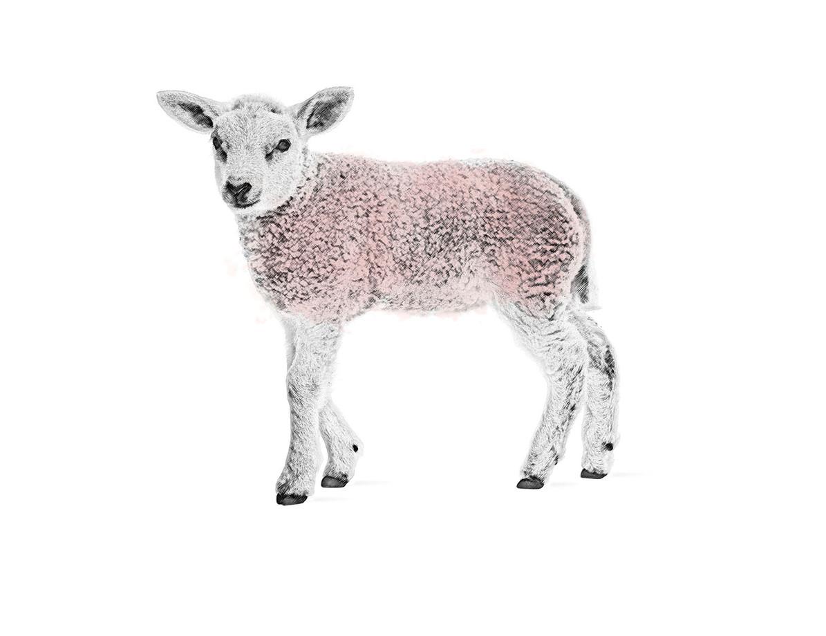 Artistic-Print-Lamb-Sketch-Watercolor.jp