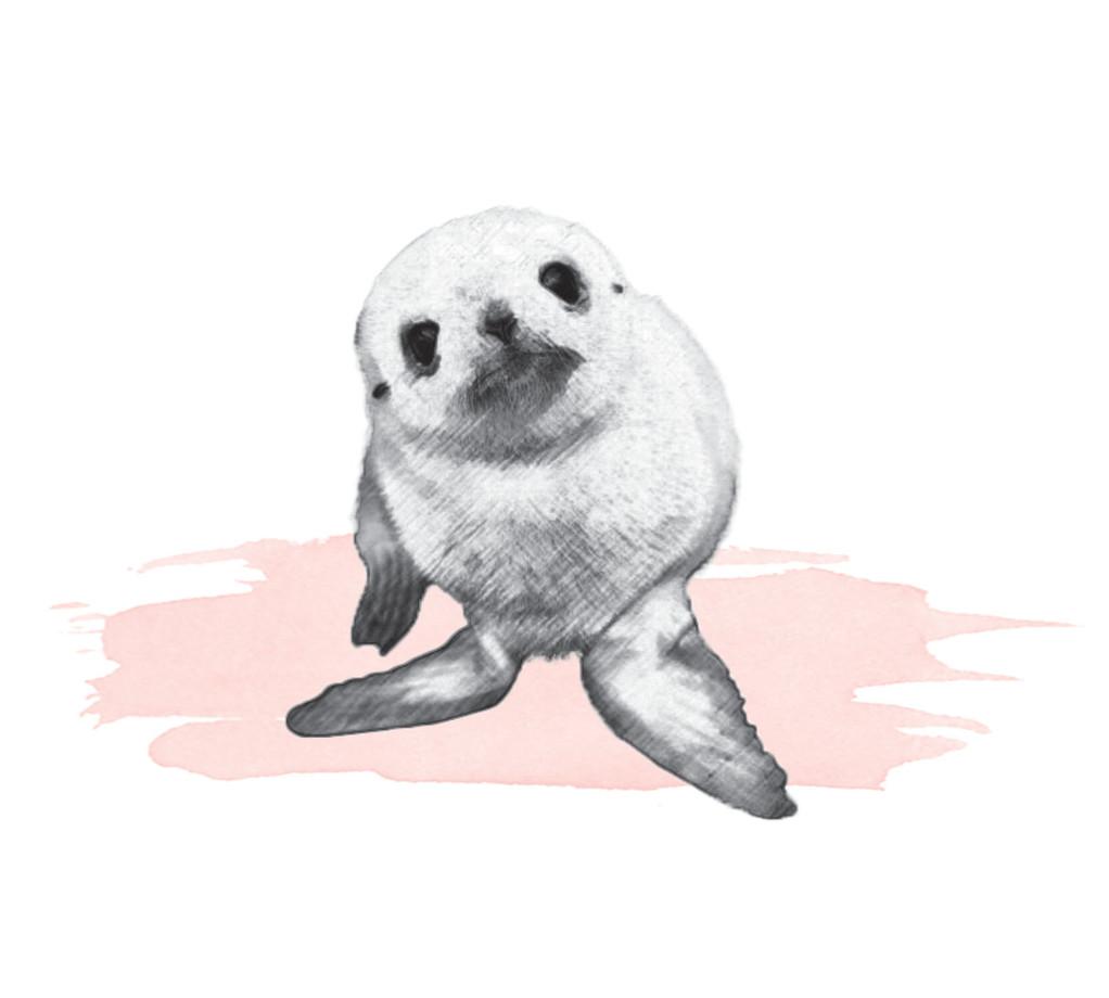 Artistic-Print-Seal-Sketch-Watercolor.jp