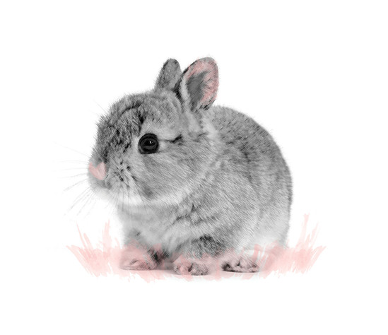 Artistic-Print-Bunny-Sketch-Watercolor.j